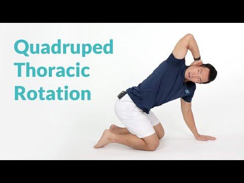 Quadruped Thoracic Rotation for Spine Mobility