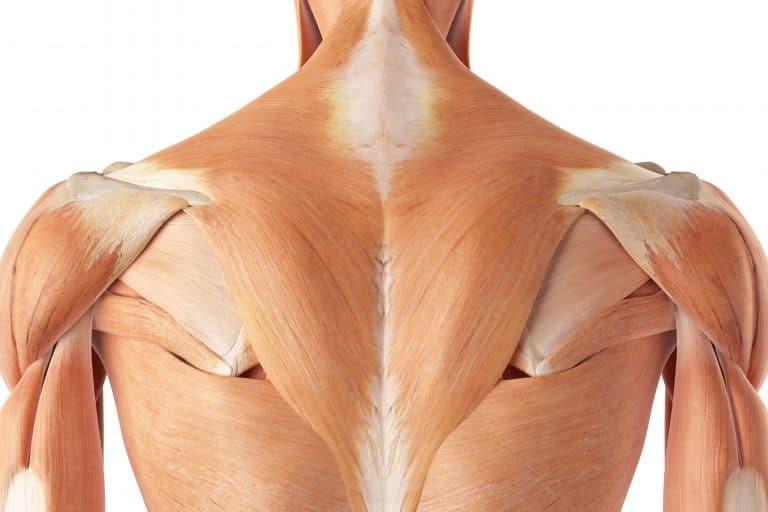 ejercicios con elásticos para desarrollar el hombro completo